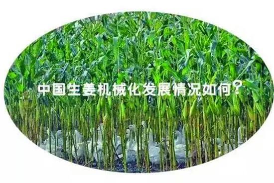 中国生姜的机械化水平是多少
